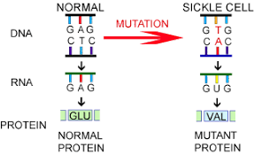 SB2. How genetic information is expressed in cells ...